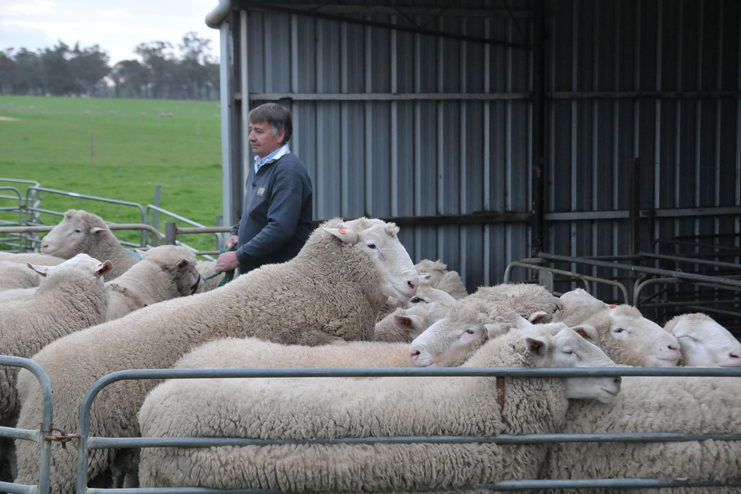 Farmer Confidence Boosted By Wet Months Business News